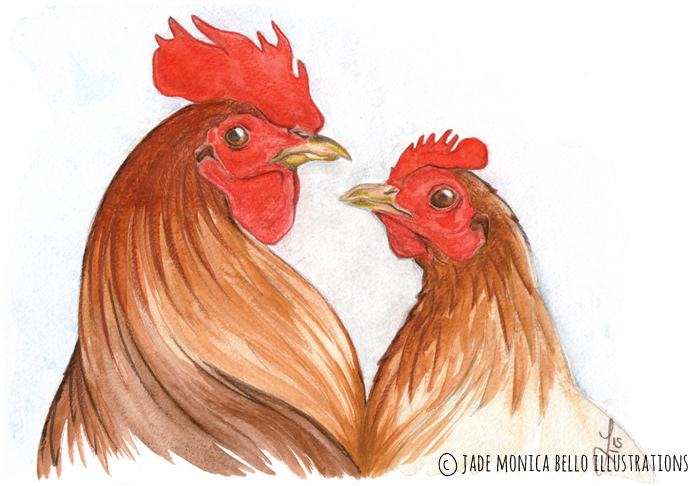 Protection, animals, illustration, vegan, vegan art, animal rights, rooster, hen, chicken