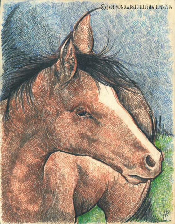 Horse, animals, illustration, vegan, vegan art, animal rights